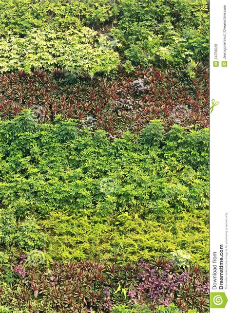Interior Plant Wall vertical garden royalty free stock photos image 34758028