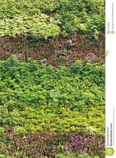 Vertical Garden Royalty Free Stock Photos   Image: 34758028