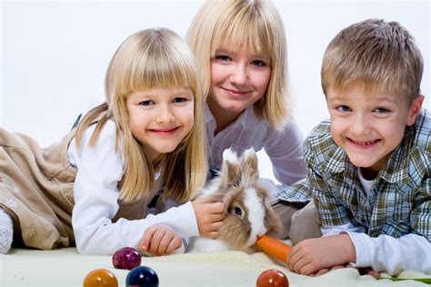 how to become a breeder how to become a rabbit breeder usa rabbit breeders