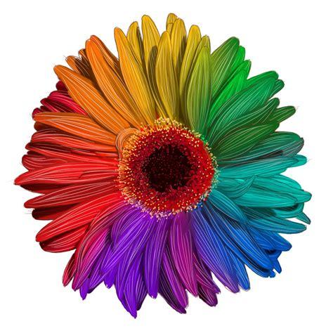 flowers by color color wheel flower designs www pixshark images