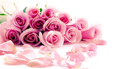 themes rose download pink roses hd wallpapers free download