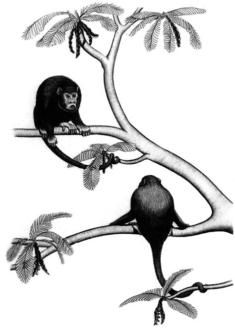 swinging monkey coloring page swinging monkeys free printable coloring pages swinging