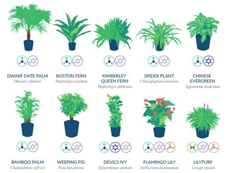 nasa  compiled  list    air cleaning plants