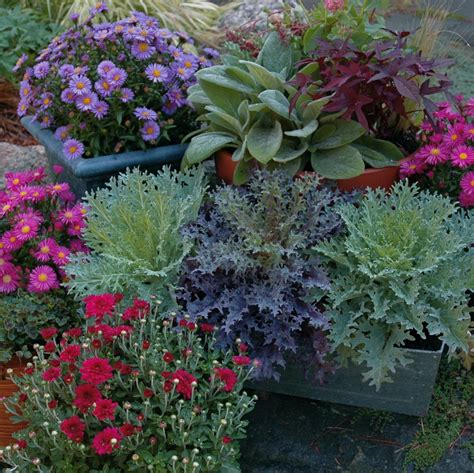 fall plants 8 tips for fall and winter container gardening
