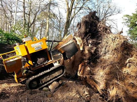Tree Stump Removal High Wycombe