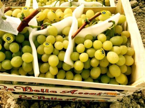 uva da tavola uva da tavola senza semi aumenta la domanda