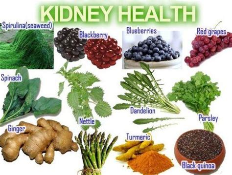 kidney failure diet how to repair your kidneys naturally seattle nature project