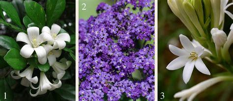 21 plants for a fragrant garden flower power