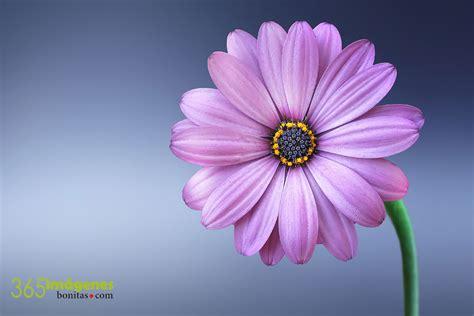imagenes fondo de pantalla lindas fondos de pantalla gratis en hd 365 im 225 genes bonitas