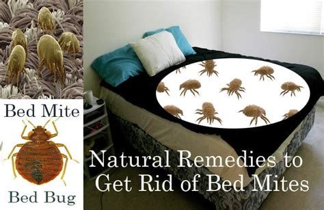 natural home remedies   rid  bed mites dust mites  bed
