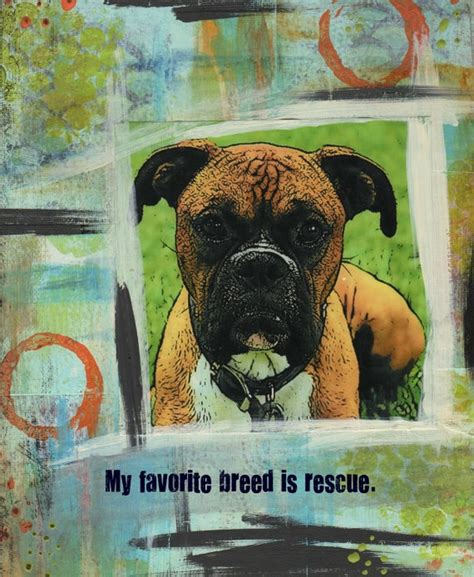 rescue dogs rock rescue dogs rock consider adopting or fostering a from your local shelter