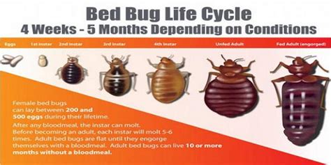 bed bug removal service spring is coming nyc s best exterminator service warns