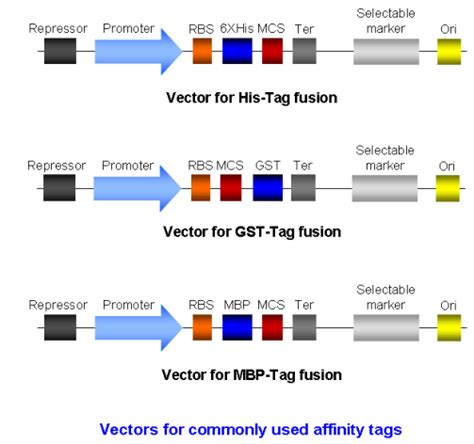protein i k tt biotech crunch three commonly used affinity tags for