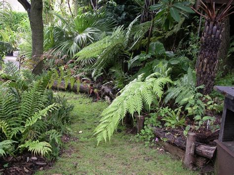 167 Best Images About Helechos On Pinterest Gardens Fern Garden Ideas