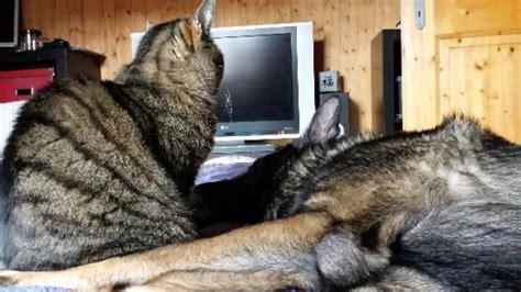 hund in wohnung hund und katze in haus wohnung besch 228 ftigen frag mutti