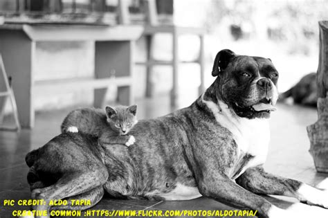 dog suddenly wants to be alone how long does it take for a boxer to give birth boxer dog info and health tips