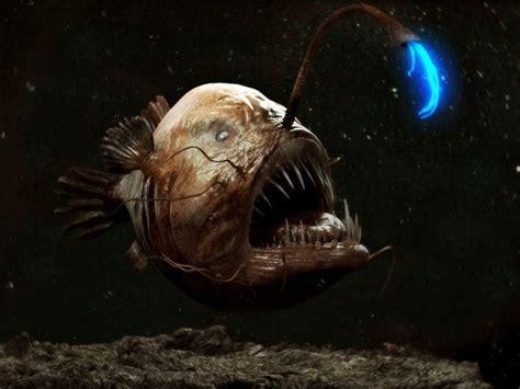 imagenes raras del oceano las 7 criaturas m 225 s curiosas y extra 241 as del oc 233 ano