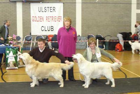 ulster golden retriever club woodmore golden retrievers ireland home of top winning golden retrievers