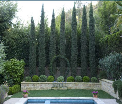 small backyard trees for privacy beautiful making privacy for our new small yard this is