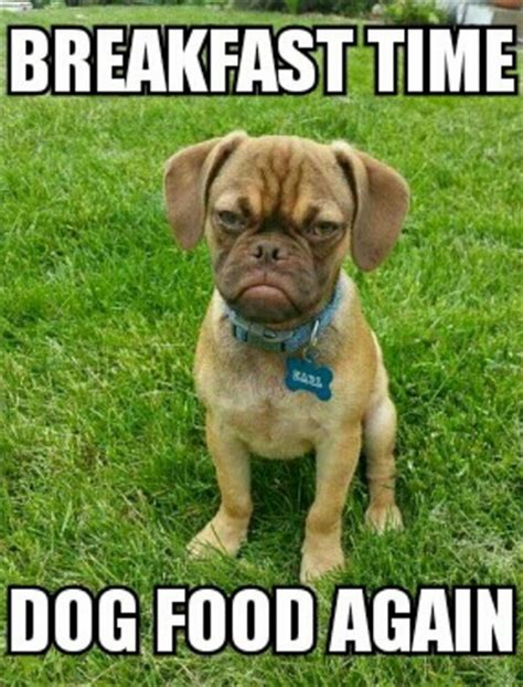 Frowning Dog Meme - photos having a bad day grumpy earl s puppy face will
