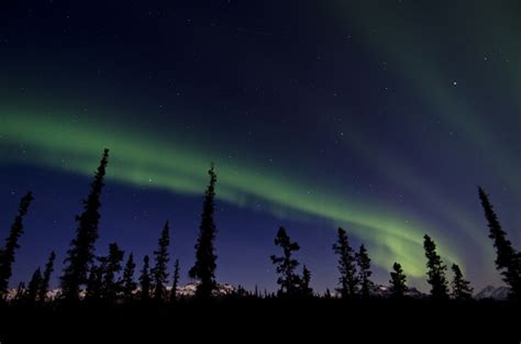 denali national park northern lights top 10 reasons to visit denali national park in alaska