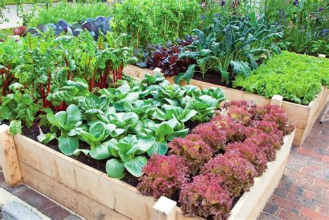 Productive Vegetable Gardening Tips For Beginners Vegetable Gardens For Beginners