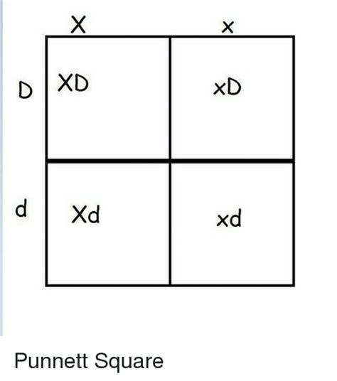 color blindness punnett square color blindness punnett square color blindness linked