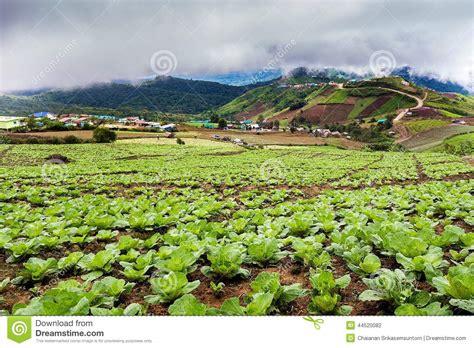 imagenes de la vida rural co da couve chinesa na vida rural no tubberk de phu