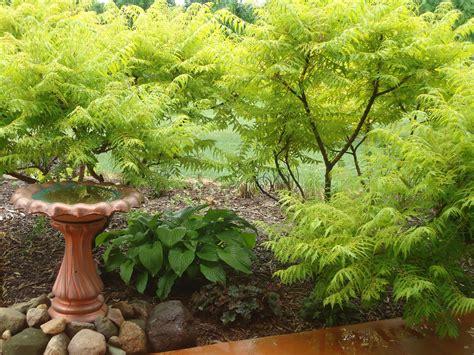 zone 4 gardening bonnie s zone 4 garden in minnesota 12 photos