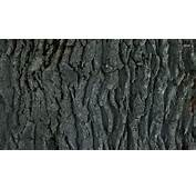 Nature S HD Wallpaper  1920x1080 39261