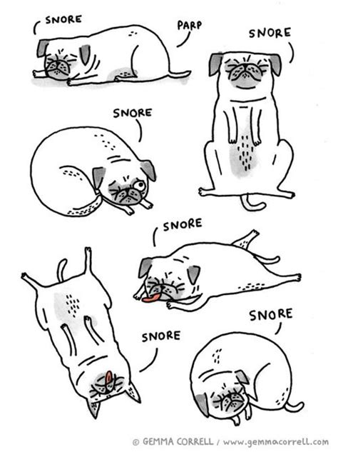 pug behaviour 25 best ideas about pug on pug illustration taco and