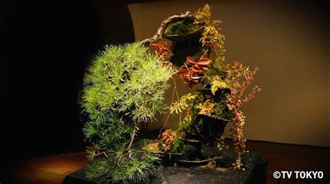 bonsai masterclass all you do you know this japanese man masashi hirao who is admired all over the world japan info