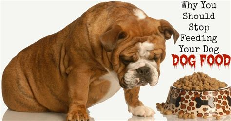 how should a eat puppy food why you should stop feeding your commercial food