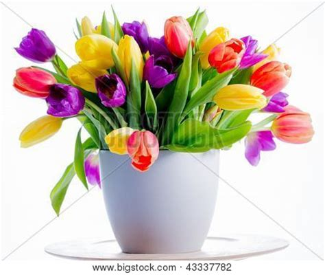 flowers tulips colorful fresh tulips