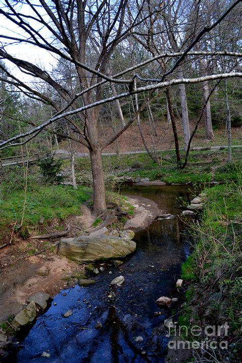 Garden Creek by Garden Creek In Carolina Photograph By