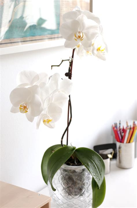 trendnet 187 how i make my orchids bloom again