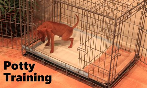 when to potty a puppy potty puppy apartment official how to potty a puppy fast