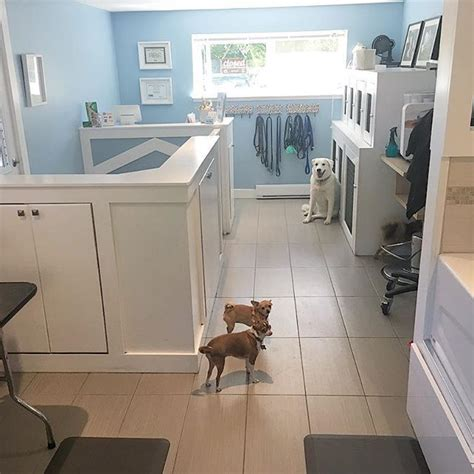 grooming salon 17 best images about grooming business decor on pets grooming salon and