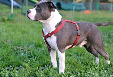 marche e sicura pettorina per cani comoda e sicura tipologie marche e