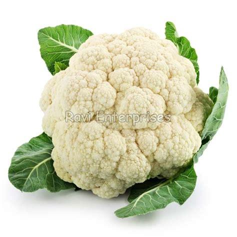 Cauliflower Fresh fresh cauliflower manufacturer innagpur maharashtra india