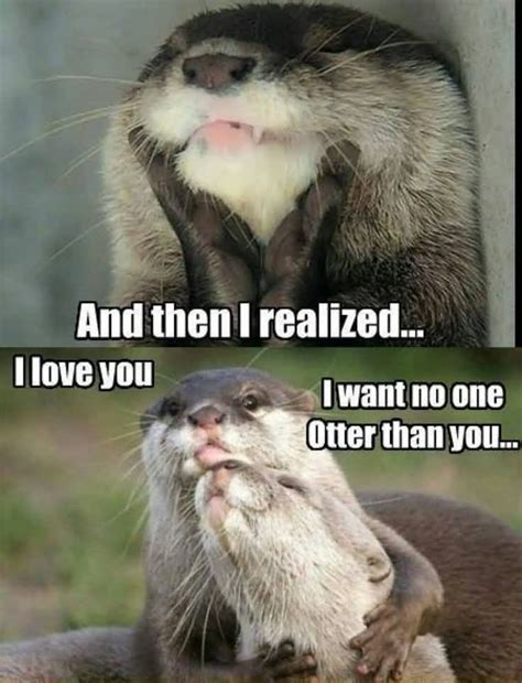Otter Love Meme - i m sorry i love you love meme golfian com
