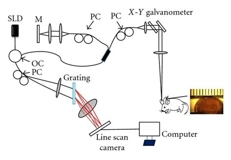superluminescent diodes define superluminescent diode spatial coherence 28 images fig 1 schematic of oct imaging system sld