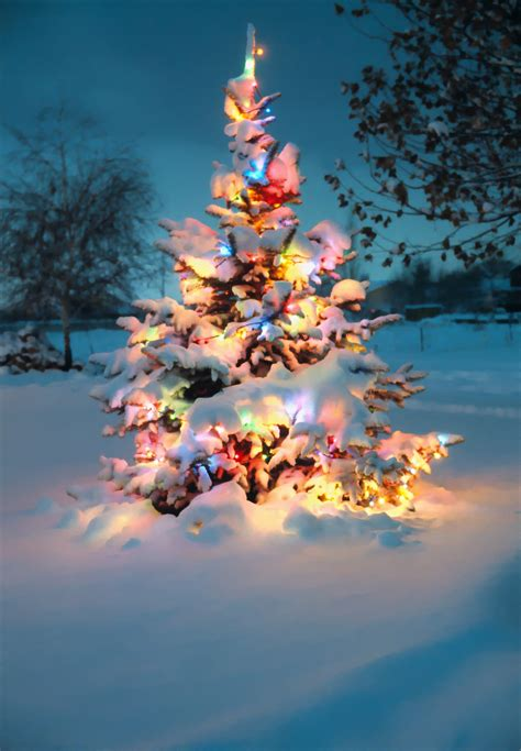 snow covered christmas tree with colorful lights re