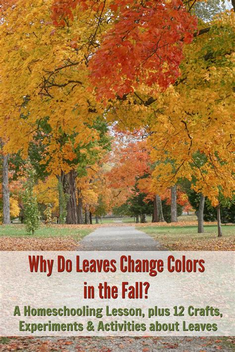 why do leaves change color in fall why do leaves change colors in the fall a homeschooling