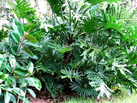 1000 images about tropical plants on pinterest