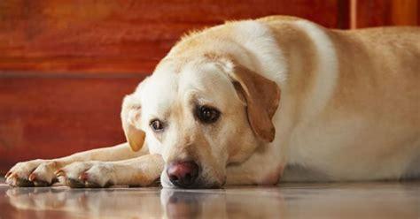 gland cancer in dogs gland cancer in dogs
