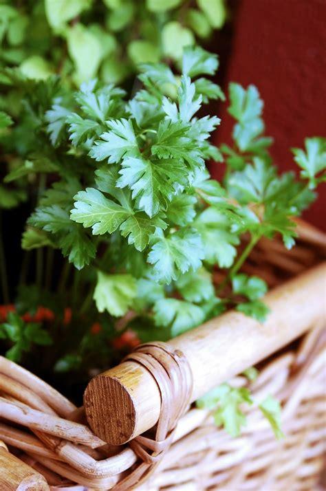 herb garden thrillers   container garden