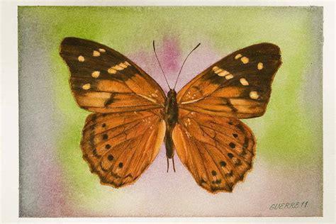imagenes de mariposas que vuelan las mariposas de antonio guerrero vuelan de florence a la