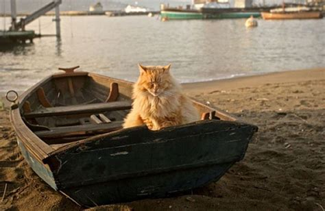 boat cat cats make great sailors 26 photos click here the ocean