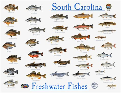 freshwater fish nature picture selection freshwater fish